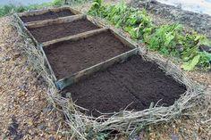 Container Gardening, Gardening Tips, Plants, Inspiration, Garden, Backyard Farming, Compost, Creative, Lawn And Garden