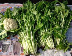 農業体験農園で、カリフラワー、水菜を収穫。サラダと鍋でいただきました。美味しかった。  食べきれない分は、親類に分けたのと、近所の方の柿と物々交換。