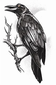 Black Crow On Branch Tattoo Drawing Animal Tattoos, Raven Tattoo, Gothic Tattoo, Drawings, Branch Tattoo, Original Tattoos, Feather Tattoos, Tattoo Stencils, Best Sleeve Tattoos
