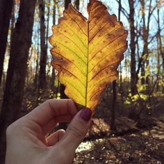 My heart shaped leaf  by ladykatie86