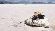Deiter Meets Bear -- While Dieter felt Bear had a most unimaginative name, he was thrilled to meet someone like him traveling to the Salt Flats in Nevada, all the way from New Zealand. His Travel, Nevada, New Zealand, Salt, Traveling, Teddy Bear, Adventure, Friends, Animals