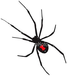 The black widow spider has a red hour glass shape marking on its underside. Black Widow Spider Tattoo, Spider Web Tattoo, Spider Pictures, Real Spiders, Graphic Design Art, Nature Pictures, Animal Drawings, Cute Animals, Creatures