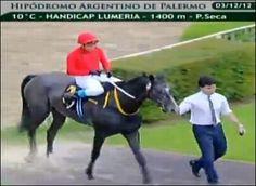 Resultados Palermo: TIA GALLARDA ganó el Handicap Lumeria. Video y análisis de la carrera. Buenos Aires, Argentina. 03 de Diciembre de 2012.