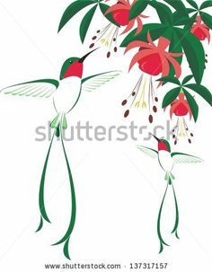 humming-birds and flowers - stock vector