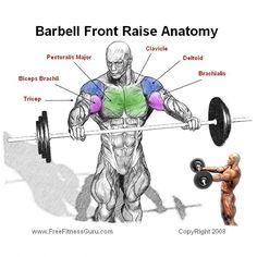 upright row anatomy  fitness  pinterest  upright
