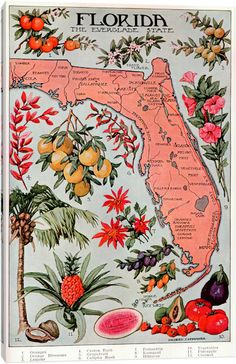 State Map of Florida (Natural Resources)