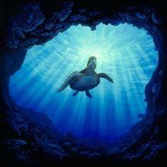 Kauai-Underwater-the-garden-island Kauaʻi or Kauai known as Tauaʻi in the ancient Kauaʻi dialect, is geologically the oldest of the main Hawaiian Islands. Underwater Life, Underwater Photos, Turtle Love, Wale, Deep Blue Sea, Mundo Animal, Ocean Creatures, Sea And Ocean, Sea World