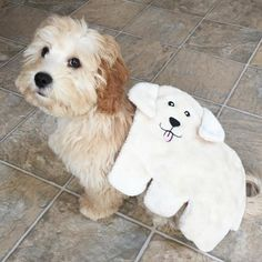 25 Adorable Dog Hybrids You Had No Idea Existed