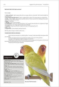 Budgies, Parrots, African Lovebirds, Cute Birds, Opaline, Animals Of The World, Light Orange, Blue Bird, Couple
