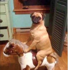 A noble steed.