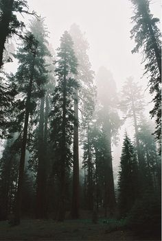 """I am most alive among the tall trees."" 