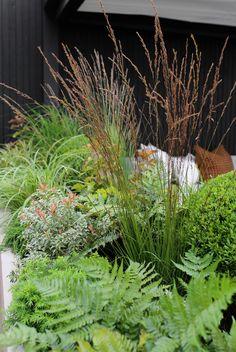 TV GARDEN DESIGN – TV2 2021 Backyard Plan, Back Gardens, Pergola, Herbs, Outdoor Decor, Green, Home Decor, Gardens, Outdoor Deck Decorating