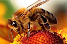 Bees tend to at least 2,000 flowers daily, with tiny wings beating 10,000 times per minute, carrying pollen, help them out with this easy to make Bee Bath.