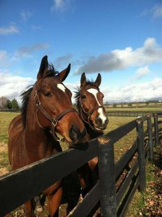 I love how these two are pasture mates! 2011 Horse of the Year Havre de Grace and 2011 Kentucky Oaks winner Plum Pretty hanging out at Taylor Made. (Photo by Kent Sweezey)