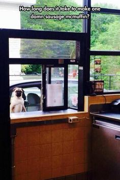 Pugs should never be kept waiting...I thought everyone knew that!