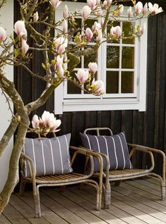 (I love Magnolia trees) the magnolia manor . X ღɱɧღ Outside Living, Outdoor Living, Garden Cottage, Home And Garden, Magnolia Trees, Outdoor Spaces, Outdoor Decor, Garden Inspiration, Interior And Exterior