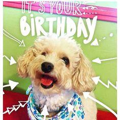 Happy Birthday Stanley who celebrated May Happy 5th Birthday, Charity, Boys, Instagram Posts, Baby Boys, Children, Senior Guys, Baby Boy