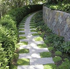 Moss and Stone Garden Path  This path uses rectangular stones with moss growing in between