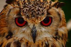 Birds of prey Birds Of Prey, Nature, Animals, Naturaleza, Animales, Animaux, Animal, Animais, Nature Illustration