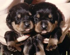 ...and we'll have enough land for these pups!