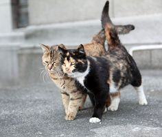 These two feral cats are spotted on a University campus in Shanghai. They follow each other wherever they go. They share food and warmth and lean on one another for love and comfort according to Jianfu. There is not a moment that they aren't seen together. What an inspiring pair!