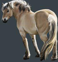 Fjord Pony by Chicken-Priestess