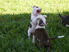 puppy goes rawwwrrrr