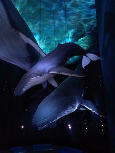 Stralsund - Ozeaneum - Halle der Wale Aquarium Design, Wale, Erika, Strand, Mammals, Animals And Pets, Concept Art, Germany, Journey