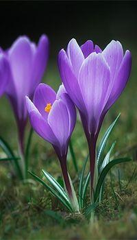 , by Robert Vierthaler (© Unusual Flowers, Amazing Flowers, My Flower, Purple Flowers, Spring Flowers, Flower Power, Beautiful Flowers, Flower Pictures, Watercolor Flowers