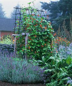 Картинки по запросу decorative vegetable garden