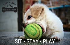 Come play in Plano's largest doggie playroom! There's lots of other friendly dogs to with too! It's so much fun!!!
