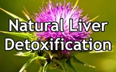 An occasional liver detox can do wonders for your total body health. Here are 4 herbs and foods that can help keep your liver healthy and detoxified. Find  the Latest ►☺ LIVER DETOX ☺ ◄ Breaking news you can use ►♥◄ UPDATED DAILY at http://carbswitch.com/2014/09/24/liver-detox-diet-drink-smoothie-home-remedy-foods/ ►♥◄ liver detox diet liver etox drink liver detox smoothie liver detox home remedy liver detox foods ►♥◄ #carbswitch Please Repin ►♥◄ - Best Diet Plans Best Diet Foods