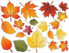 Őszi levelek a díszítés iskolai tábla vagy egy óvodai csoportban, a szeptember 1
