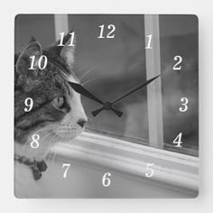 Dreaming Of Warmer Weather Grayscale Square Wall Clock Photography Gifts, Animal Photography, Outdoor Cats, Indoor Outdoor, Cat Gifts, Go Outside, Hand Coloring, The Outsiders, To Go