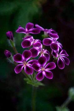 Unusual Flowers, Amazing Flowers, Purple Flowers, Beautiful Flowers, Beautiful Gorgeous, Spring Flowers, Flowers Nature, Nature Photography Flowers, Flower Pictures