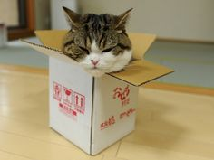 Maru always makes me happy when I feel sad. He never gives up. He always finds a way.