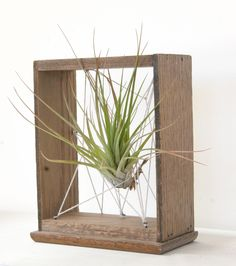 """Something like this but maybe get kids to string the airplant up with colorful yarn etc... and add some (possibly painted) twigs. then could auction off. place a candle alongside . all on top of a fabric """"flag""""(solid with fringe)."""