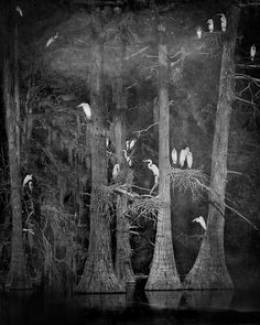 Keith Carter - Nesting Tree #2 | 1stdibs.com