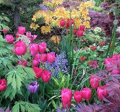 Jardines llenos de color: Toda una Fantasía!!!