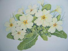 Primroses, original watercolours, Sara Kenyon, SAA Professional Members' Galleries