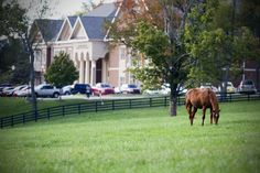 Midway College's working horse farm is right on campus. #MidwayCollege