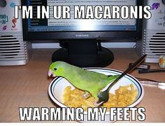 funny animals, funny animal pictures, funny pictures of animals Funny Birds, Cute Birds, Pretty Birds, Funny Cats, Birds Pics, Funny Minion, Beautiful Birds, Simply Beautiful, Funny Animals With Captions
