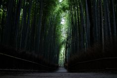 Bamboo groove - A road through silence and beauty