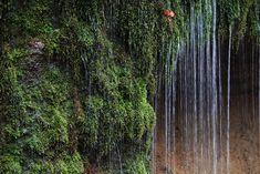 https://flic.kr/p/7eJ5JP | Waterfall / 白糸の滝(しらいとのたき) | Shiraito-no-taki(waterfall), Kitasaku-gun(county) Nagano-ken(Prefecture), Japan  長野県北佐久郡(ながのけん きたさくぐん) 白糸の滝(しらいとのたき)