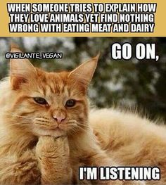 LOLcats is the best place to find and submit funny cat memes and other silly cat materials to share with the world. We find the funny cats that make you LOL so that you don't have to. Cute Cats And Kittens, Cool Cats, Animals And Pets, Cute Animals, Orange Cats, Maine Coon Cats, Ginger Cats, Beautiful Cats, Cat Memes