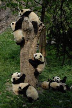 xxoo - panda party