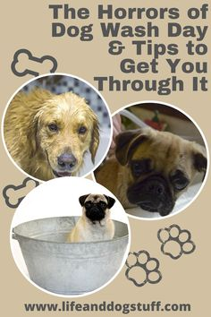 The horrors of dog wash day and 9 tips to get you through it. Buffy gives some much needed tips to the dogs on how to survive wash day. Cute Dogs And Puppies, Pet Dogs, Pets, Dog Memes, Dog Humor, Funny Dogs, Hilarious Animals, Dog Wash, Funny Dog Pictures