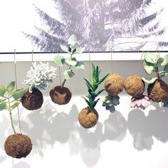 Planteplaneter fra Kaja Skytte