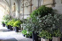 Royal Wedding Foliage Westminster Abbey