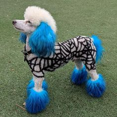 Halloween dog grooming with OPAWZ dog hair dye by Angela Wadley Dog Grooming Styles, Dog Grooming Salons, Poodle Grooming, Pet Grooming, Grooming Shop, Dog Hair Dye, Dog Dye, Dressage, Animals And Pets